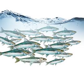Nedostatek omega-3 se projeví na fyzickém i duševním zdraví